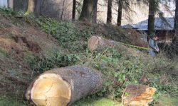 რა იცავს ხეებს?